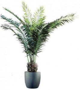 Un palmier pour dépolluer votre intérieur